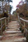 紅葉飄飄15日東京自由行--御岳山:●非常具有原始況味的一小段路.JPG