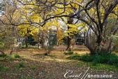 紅葉飄飄15日東京自由行--閃耀著童話森林般迷人色彩的小石川植物園:37●無論坐在何處,舉目皆是如畫美景.JPG