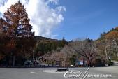 紅葉飄飄15日東京自由行--寶登山尋寶趣:09●接著一段路,看到大型指示牌,準沒錯,就是這兒!.JPG