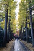 大田黑公園入口處長長的銀杏並木道:02.JPG