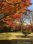 紅葉飄飄15日東京自由行--殿ヶ谷戸庭園:20●園區內較高處屬西式風格的寬闊草坪,與低處以次郎弁天池為中心的日式庭園,構成日西合璧獨特風貌 (2).JPG