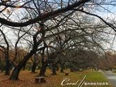 坐在小石川植物園內的樹下賞秋吧:04.JPG