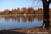 紅葉飄飄15日東京自由行--水光雲影、秋色無邊的水元公園:15●在沿著水域漫走的同時,孩童在對岸遊戲區的歡叫聲,一度打斷聆聽鳥語的意興,這也才驚覺,走了一段不算短的時