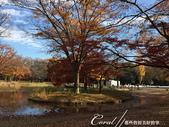 紅葉飄飄15日東京自由行--代代木公園:20●沿著噴水池漫走,每個角度都有超越想像的夢幻美景.JPG