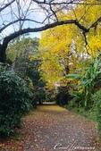 紅葉飄飄15日東京自由行--閃耀著童話森林般迷人色彩的小石川植物園:07●決定先跳過,像似通往秘境一般的深長小徑.JPG
