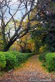 紅葉飄飄15日東京自由行--閃耀著童話森林般迷人色彩的小石川植物園:08●決定先跳過,像似通往秘境一般的深長小徑.JPG