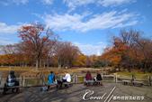 紅葉飄飄15日東京自由行--代代木公園:26●陽光下野餐的遊人.JPG