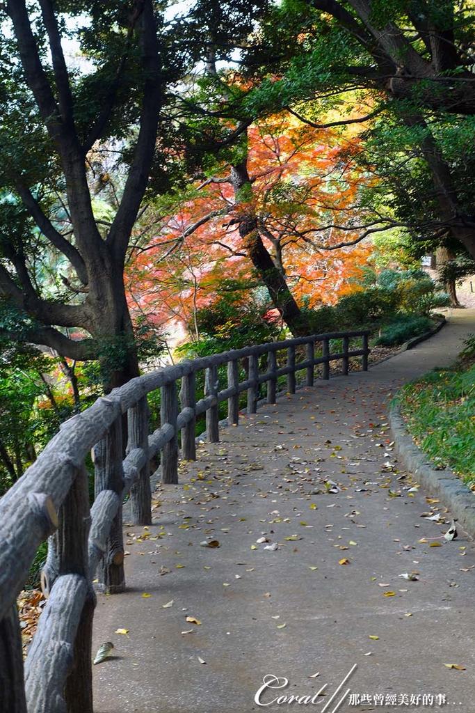 紅葉飄飄15日東京自由行--我在小石川植物園:4.●在日本庭園的區塊內,各異奇趣的小徑也特別多,隨意走走,也有不同風光.JPG