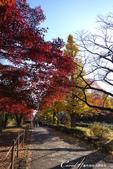 紅葉飄飄15日東京自由行--大学通り:14●想像一下每天步行這條路上下課的感受....JPG