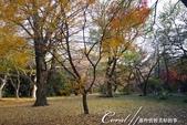 紅葉飄飄15日東京自由行--閃耀著童話森林般迷人色彩的小石川植物園:26●樹的千姿百態.JPG