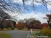 紅葉飄飄15日東京自由行--閃耀著童話森林般迷人色彩的小石川植物園:14●繽紛又精彩的植物羅列柏油路的兩旁.JPG
