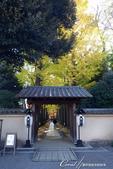 大田黑公園入口處長長的銀杏並木道:01.JPG