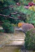 紅葉飄飄15日東京自由行--我在小石川植物園:42●在日本庭園的區塊內,各異奇趣的小徑也特別多,隨意走走,也有不同風光.JPG