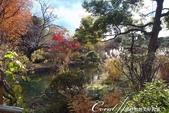 紅葉飄飄15日東京自由行--雖滿園蕭瑟卻也難掩風雅的向島百花園:21●由自然沼澤形成意趣橫生的池塘邊,佈滿應景的秋天植物,連芒草也看起來具有詩意03.JPG