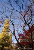 紅葉飄飄15日東京自由行--大学通り:13●想像一下每天步行這條路上下課的感受....JPG