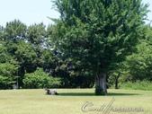 初夏14日自由行--春風吹又生的名古屋城:●人生難得幾回有。瞧這位老兄悠哉的躺在樹蔭下閱讀他的文件,想必是位積極認真的上班族01.JPG