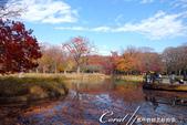 紅葉飄飄15日東京自由行--代代木公園:17●沿著噴水池漫走,每個角度都有超越想像的夢幻美景.JPG