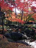 紅葉飄飄15日東京自由行--大田黑公園:17●園中聚集了多種日式庭園的要素,包括池塘、溪流、假山、小橋、樹林、展館及茶屋,構成了細緻且繁複的迴游式庭