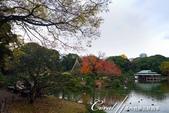 紅葉飄飄15日東京自由行--清澄庭園一眼看不完的池畔風情:13.JPG