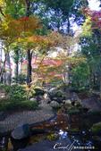 紅葉飄飄15日東京自由行--大田黑公園:19●園中聚集了多種日式庭園的要素,包括池塘、溪流、假山、小橋、樹林、展館及茶屋,構成了細緻且繁複的迴游式庭