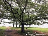 初秋記遊之遺世獨立的竹田城遺跡:●是點綴寂寥遺蹟的樹.JPG