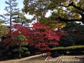 紅葉飄飄15日東京自由行--殿ヶ谷戸庭園:25●高低錯落的崖間,種植了赤松、楓樹與竹,顯現了多重生態下相互輝映的美貌.JPG
