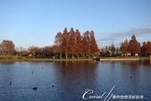 紅葉飄飄15日東京自由行--水光雲影、秋色無邊的水元公園:20●水岸邊的水杉、北美楓香、落羽松...層層疊疊佈成高大壯麗的景象,讓我一圓兒時的拼圖之夢02.JPG