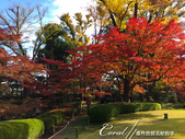 紅葉飄飄15日東京自由行--大田黑公園:22●圍繞池邊的散步道,讓人流漣忘返.JPG