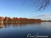 紅葉飄飄15日東京自由行--水光雲影、秋色無邊的水元公園:20●水岸邊的水杉、北美楓香、落羽松...層層疊疊佈成高大壯麗的景象,讓我一圓兒時的拼圖之夢05.JPG