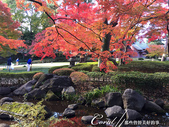 紅葉飄飄15日東京自由行--大田黑公園:18●園中聚集了多種日式庭園的要素,包括池塘、溪流、假山、小橋、樹林、展館及茶屋,構成了細緻且繁複的迴游式庭