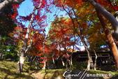紅葉飄飄15日東京自由行--殿ヶ谷戸庭園:04●懸崖上方的紅葉亭內,滿滿的賞楓遊客.JPG