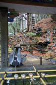 紅葉飄飄15日東京自由行--大猷院:●不能只被華麗外觀迷惑,這座手水舍有花功夫自山上引水下來呢.JPG