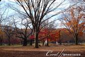 紅葉飄飄15日東京自由行--代代木公園:32●不同層次紅的櫸樹林,帶來獨有的美好氛圍.JPG