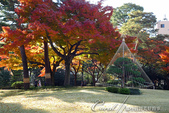 殿ヶ谷戸庭園的深秋楓葉,如火如荼、如烈燄灼燒一般無窮盡的美麗:04.JPG