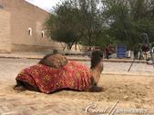 2019Amazing!穿越古絲路上的中亞五國之旅(9-3)--烏茲別克斯坦之希瓦內城:19●不用像千百年前的祖先馱負重物往來東西方,這隻向觀客收費拍照的駱駝悠閒地望著形形色色來來去去的遊人.jpg
