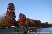紅葉飄飄15日東京自由行--水光雲影、秋色無邊的水元公園:20●水岸邊的水杉、北美楓香、落羽松...層層疊疊佈成高大壯麗的景象,讓我一圓兒時的拼圖之夢03.JPG
