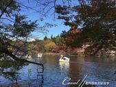 井之頭恩賜公園內的人氣設施─天鵝船:IMG_2968.JPG