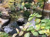 紅葉飄飄15日東京自由行--愛宕神社:11●小小神社內的秋之意境.JPG