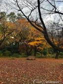 坐在小石川植物園內的樹下賞秋吧:05.JPG