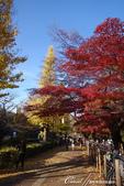 紅葉飄飄15日東京自由行--大学通り:15●想像一下每天步行這條路上下課的感受....JPG