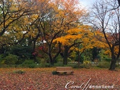 坐在小石川植物園內的樹下賞秋吧:06.JPG