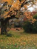 坐在小石川植物園內的樹下賞秋吧:11.JPG