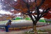 紅葉飄飄15日東京自由行--國營昭和紀念公園:30●秋天的景色,這是四季分明的過度才能享有的極緻體驗.JPG
