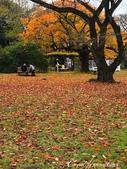 坐在小石川植物園內的樹下賞秋吧:08.JPG