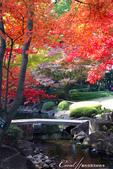 紅葉飄飄15日東京自由行--大田黑公園:11●秋的紅葉,將池畔點綴到近乎夢幻的境界.JPG