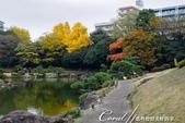 紅葉飄飄15日東京自由行--清澄庭園斑瀾的秋色:06.JPG