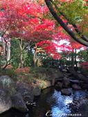 大田黑公園內的美麗楓情畫:IMG_2903.JPG