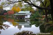 紅葉飄飄15日東京自由行--清澄庭園:31●池中,營造出濃濃日式風情的茶屋.JPG