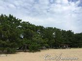在水一方--初秋記遊之丹後天橋立海上沙洲閒情散策:●但撇頭一看,不得不讚嘆地貌神奇,沙洲底下的淡水,滋養了千百年歲數的松木群.JPG