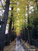 大田黑公園入口處長長的銀杏並木道:03.JPG